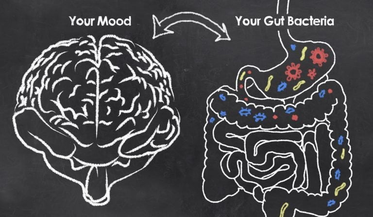 gut brain connection