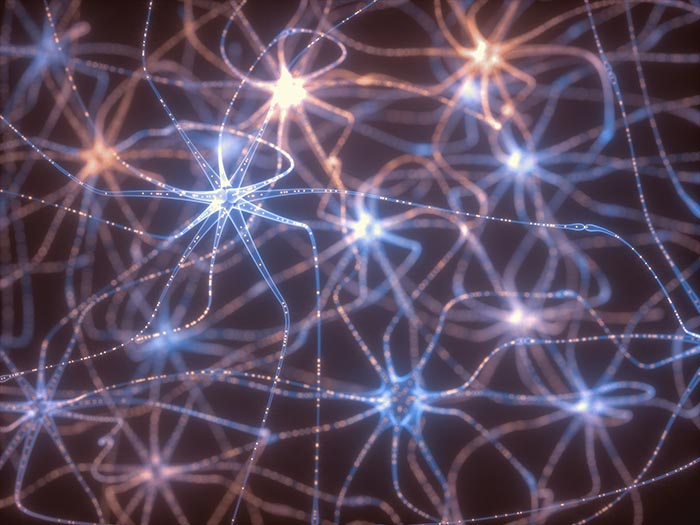 BDNF Neurogenesis